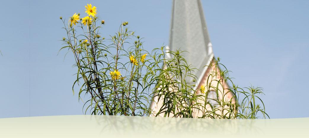 Zigelli stefan einrichtung unterhalt von g rten und parks friedrichshafen deutschland - Gartenbau friedrichshafen ...
